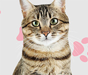 i love finding cats collector's edition free download