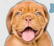 I Love Finding Pups Collector's Edition Free Download